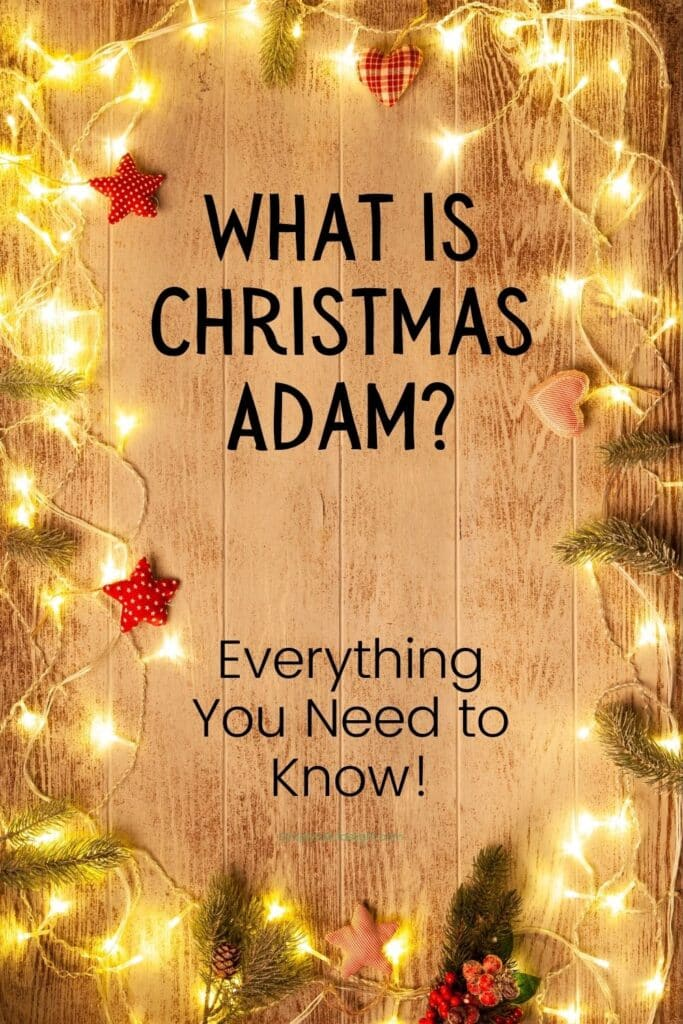 What is Christmas Adam?  Everything you need to know.