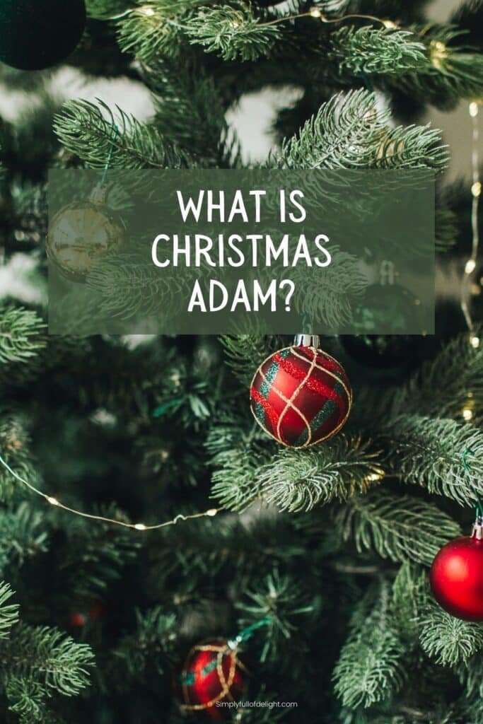 What is Christmas Adam?